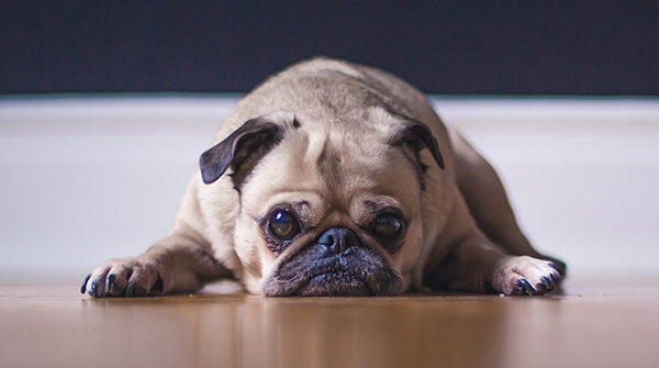 Como os Pets podem ser úteis na evangelização